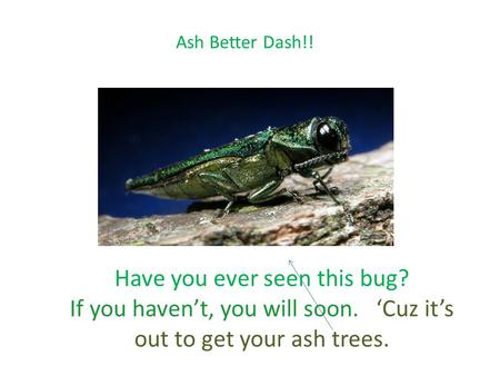 Ash Better Dash!! Have you ever seen this bug? If you haven't, you will soon. 'Cuz it's out to get your ash trees.