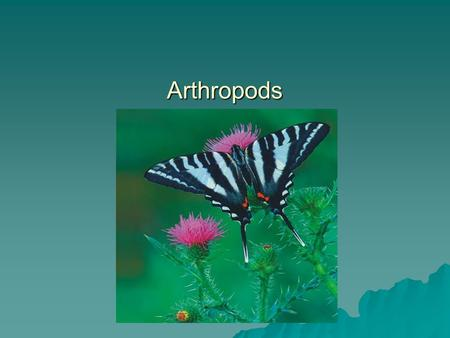 Arthropods. Phylum Arthropoda - Arthropods  Largest and most successful phylum  75% of all animals!  Segmented body  Tough exoskeleton  Joint appendages.