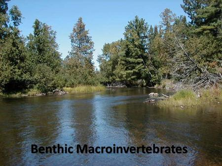 Benthic Macroinvertebrates. Benthic – bottom-dwelling Macro – can be seen with the unaided eye Invertebrates – without a backbone or spinal column Examples: