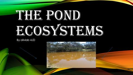 THE POND ECOSYSTEMS By oliviab 4JD. CONTENTS PAGE What is an ecosystem ? Our investigation Where we caught our water sample What we found What we discovered.