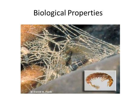 Biological Properties. Biological attributes of a waterway can be important indicators of water quality. Biological attributes refer to the number and.