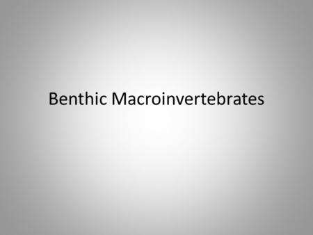 Benthic Macroinvertebrates. Requirements- 2 page word document Pictures of macroinvertebrates description Where they can be found What they eat and what.