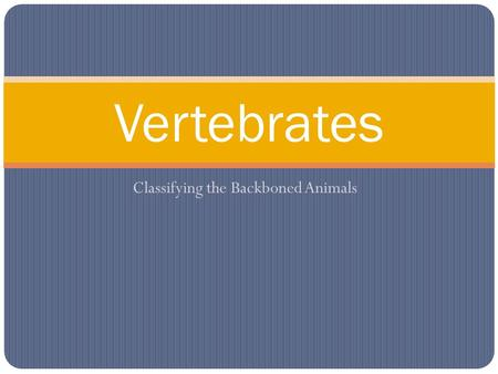 Classifying the Backboned Animals Vertebrates. Classifying Vertebrates Vertebrates can be classified into two groups using this characteristic: Cold-bloodedWarm-blooded.