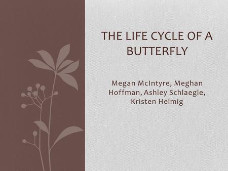 Megan McIntyre, Meghan Hoffman, Ashley Schlaegle, Kristen Helmig THE LIFE CYCLE OF A BUTTERFLY.