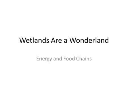 Wetlands Are a Wonderland Energy and Food Chains.