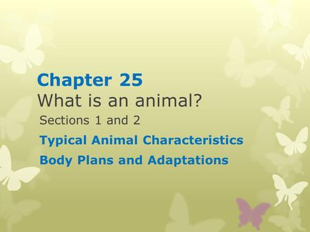 Chapter 25 What is an animal?