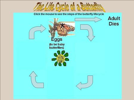 Click the mouse to see the steps of the butterfly lifecycle.
