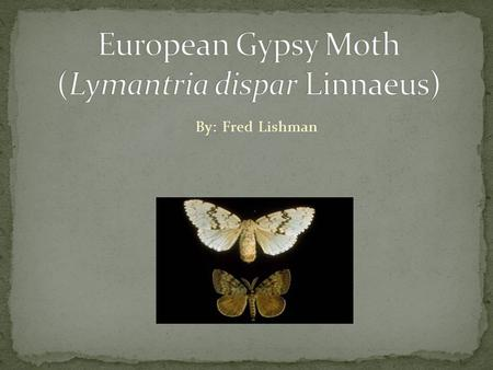 By: Fred Lishman. Native to Europe, Asia, and North Africa. Brought to the US between 1868 and 1869 by Professor L. Trouvelot. To breed hybrid silkworms.