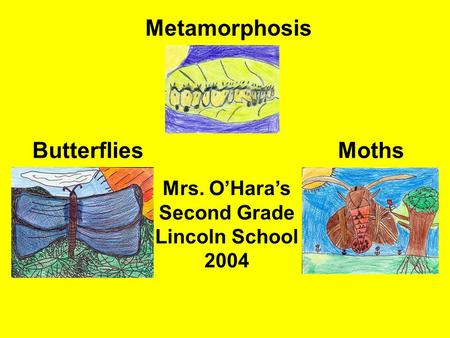 Metamorphosis ButterfliesMoths Mrs. O'Hara's Second Grade Lincoln School 2004.
