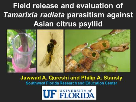 Jawwad A. Qureshi and Philip A. Stansly Southwest Florida Research and Education Center Field release and evaluation of Tamarixia radiata parasitism against.