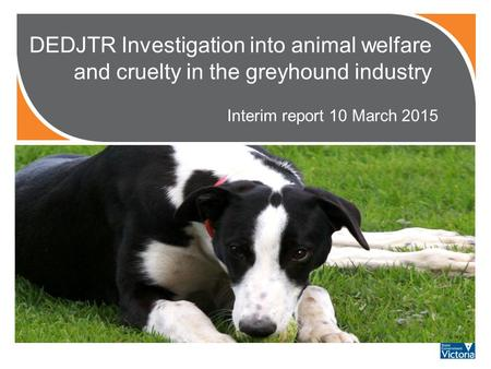 DEDJTR Investigation into animal welfare and cruelty in the greyhound industry Interim report 10 March 2015 PHOTO?