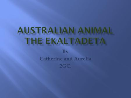 By Catherine and Aurelia 2GC.. The Ekaltladeta is a giant meat-eating rat- kangaroo marsupial (pouched mammal).