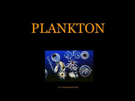 "PLANKTON www.imagequest3d.com. What is Plankton? Plankton comes from the Greek word ""planktos"", which means to ""wander"" Animals and Plants that float,"