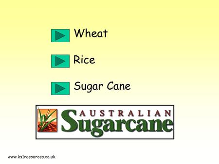 Www.ks1resources.co.uk Wheat Rice Sugar Cane. www.ks1resources.co.uk More than half of the land in Australia is owned by farmers. They produce nearly.