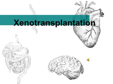 Xenotransplantation By: Alicia Skinner What is Xenotransplantation? the transplantation of cells, tissues or organs from animals to humans Cell Therapies.