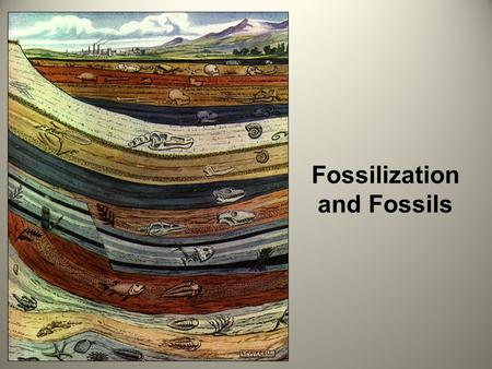 Fossilization and Fossils