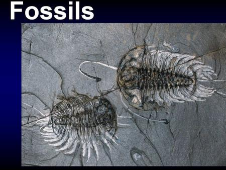 Fossils are any evidence of past life. Body fossils > > parts of the body of an organism - - e.g. --> pollen, leaves, stems, flowers, seeds, bones, fur,