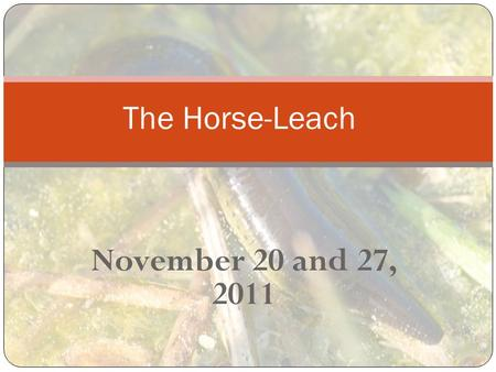 November 20 and 27, 2011 The Horse-Leach. The horse-leach Proverbs 30:15 AV1611-The horse-leach hath two daughters, crying, Giue, giue. (See Eze 23) NIV-