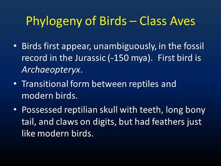 Phylogeny of Birds – Class Aves Birds first appear, unambiguously, in the fossil record in the Jurassic ( ~ 150 mya). First bird is Archaeopteryx. Transitional.