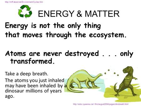 Energy is not the only thing that moves through the ecosystem. Atoms are never destroyed... only transformed.
