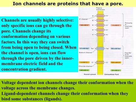 Ion channels are proteins that have a pore. Voltage dependent ion channels change their conformation when the voltage across the membrane changes. Ligand-dependent.