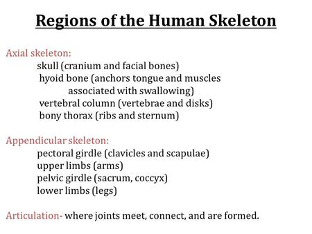 Regions of the Human Skeleton