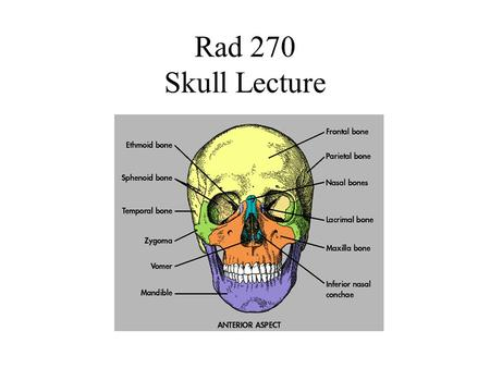 Rad 270 Skull Lecture. Skull Anatomy Comprised of 22 separate bones divided into two groups: –Cranial bones – 8 –Facial bones – 14 Cranial bones further.