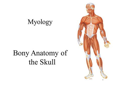 Bony Anatomy of the Skull