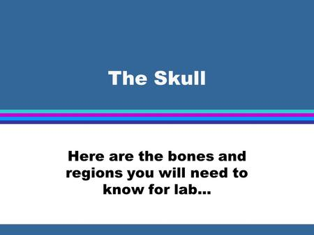 The Skull Here are the bones and regions you will need to know for lab...