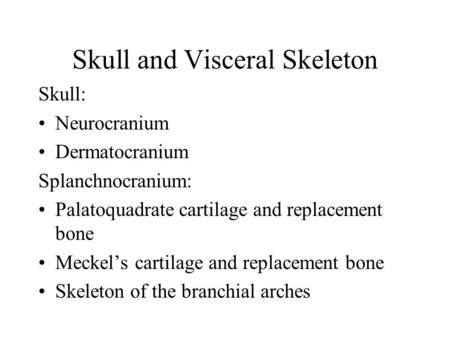 Skull and Visceral Skeleton