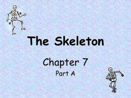 The Skeleton Chapter 7 Part A. The Skeleton Skeleton = Greek for 'dried up body' or 'mummy' Composed of bones, cartilages, joints, and ligaments –Mostly.