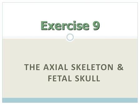 The Axial Skeleton & Fetal Skull