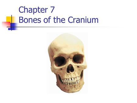 Chapter 7 Bones of the Cranium. Anatomical references Process raised area / projection of bone Fossa low area / depressed area of bone Suture aka Fibrous.