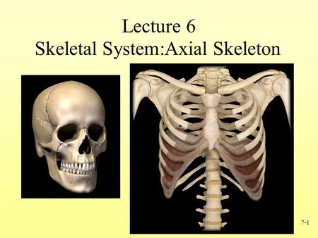 Skeletal System:Axial Skeleton