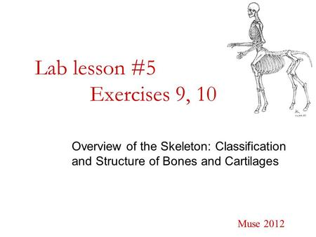 Lab lesson #5 Exercises 9, 10 Overview of the Skeleton: Classification and Structure of Bones and Cartilages Muse 2012.