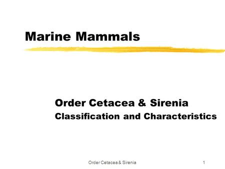 Order Cetacea & Sirenia Classification and Characteristics