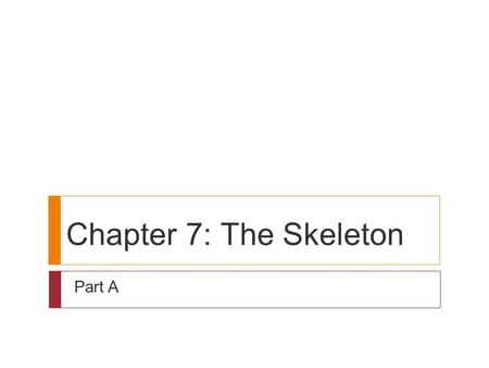Chapter 7: The Skeleton Part A.
