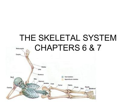 THE SKELETAL SYSTEM CHAPTERS 6 & 7. The Skeletal System Parts of the skeletal system –Bones (skeleton) –Joints –Cartilages –Ligaments Divided into two.