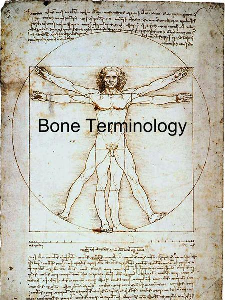 Bone Terminology. Process –A prominent projection –Example: coronoid processExample: coronoid process –Example: zygomatic processExample: zygomatic process.