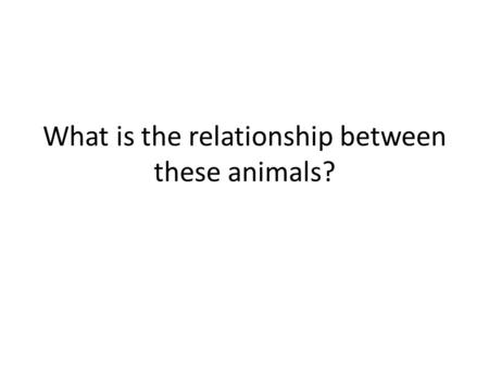 What is the relationship between these animals?.