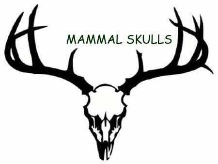 MAMMAL SKULLS. GENERAL CLASSIFICATION CARNIVORE  Obtains energy from flesh of other animals.