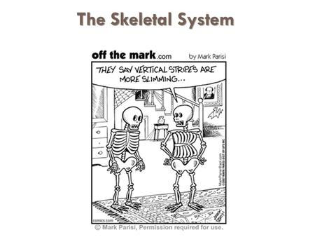 The Skeletal System The Skeletal System. Functions of Bones  Support of the body  Protection of soft organs  Movement due to attached skeletal muscles.