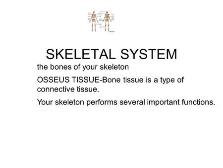 SKELETAL SYSTEM the bones of your skeleton
