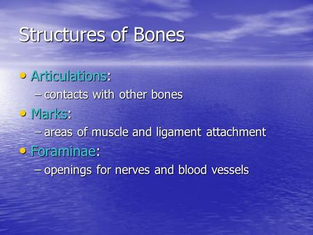 Structures of Bones Articulations: Marks: Foraminae: