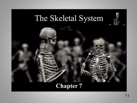 Chapter 7 7-1 The Skeletal System. Chapter 7 Skeletal System Bone Classification Long Bones Short Bones Flat Bones Irregular Bones Sesamoid Bones 7-2.