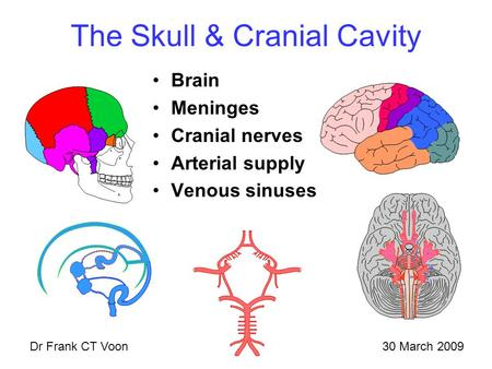 The Skull & Cranial Cavity Brain Meninges Cranial nerves Arterial supply Venous sinuses 30 March 2009Dr Frank CT Voon.