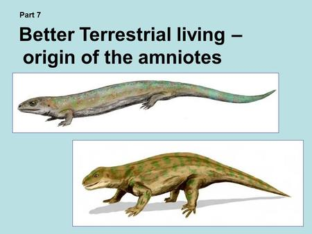 Better Terrestrial living – origin of the amniotes Part 7.