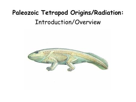 Paleozoic Tetrapod Origins/Radiation: Introduction/Overview.