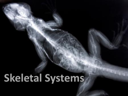 Skeletal Structure Skeletal Systems Skeletal Systems.
