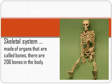 SKELETAL SYSTEM Skeletal system … made of organs that are called bones, there are 206 bones in the body.